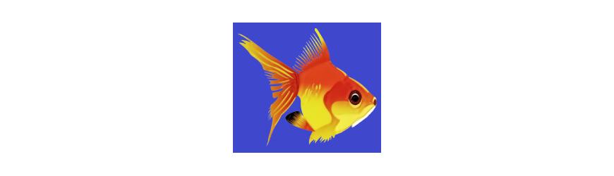 Aquarium hobby